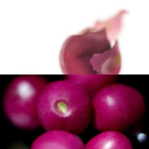 Pink Pepper, an olfactory ingredient used by the Society of Scent