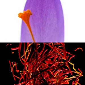 Saffron, an olfactory ingredient used by the Society of Scent